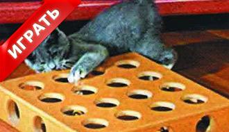 Головоломка кошек