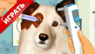 Операция на собаке