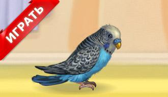 Попугай Женя