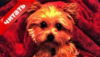 У Майли Сайрус умерла собака